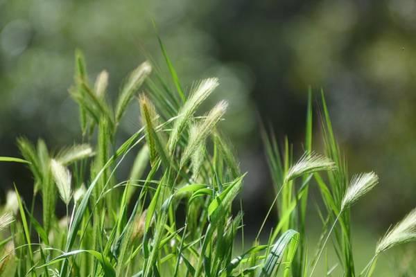 Photograph - Wispy Green by Fraida Gutovich