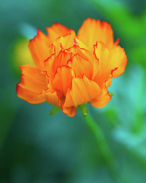 Photograph - Wispy Orange by Robert FERD Frank