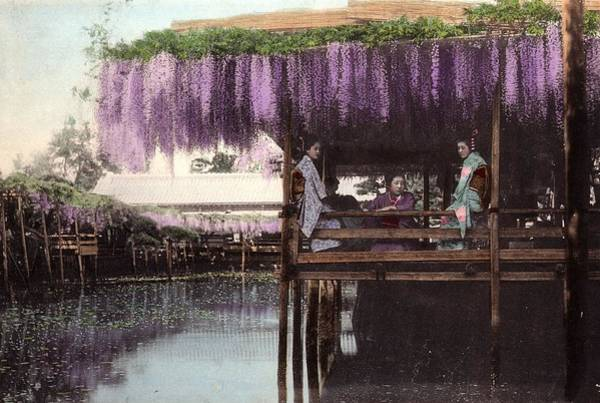 Wisteria Wall Art - Photograph - Wisteria Arbour by Spencer Arnold Collection