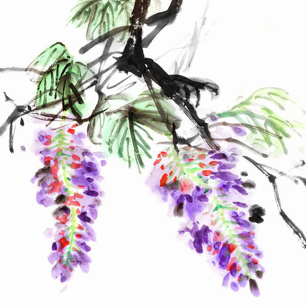 Calligraphy Digital Art - Wisteria Flowers by Vii-photo