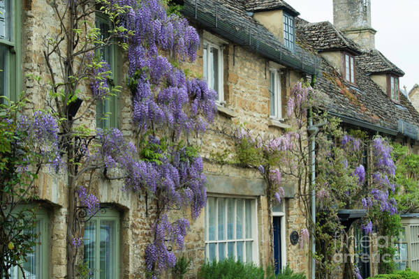 Photograph - Wisteria In Burford by Tim Gainey