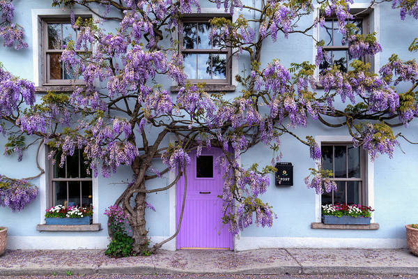 Gleeson Photograph - Wisteria Tree House - Inistioge - Ireland by Fergal Gleeson