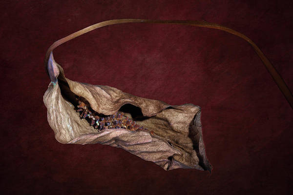 Wall Art - Photograph - Withered Beauty by Tom Mc Nemar