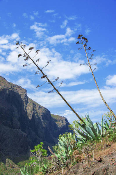 Photograph - Withered Flower Spears by Sun Travels