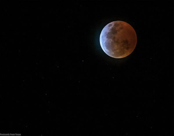 Photograph - Wolf Blood Moon by Gaylon Yancy