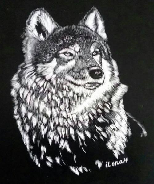Wall Art - Drawing - Wolf by ILona Halderman