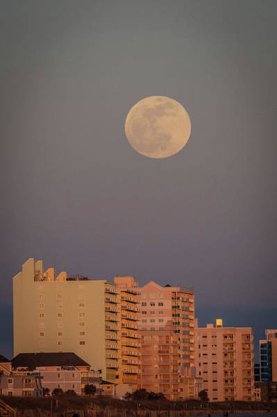 Photograph - Wolf Moon by Ree Reid