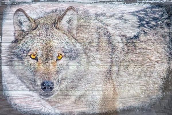 Digital Art - Wolf Stare by Debra and Dave Vanderlaan