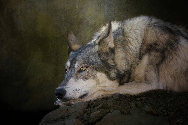 Digital Art - Wolf Watch by Nicole Wilde