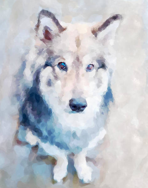 Wall Art - Painting - Wolfdog by Chris Butler