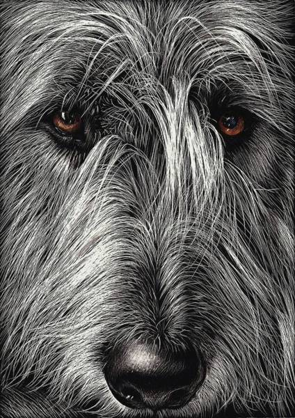 Drawing - Wolfhound by Elena Kolotusha