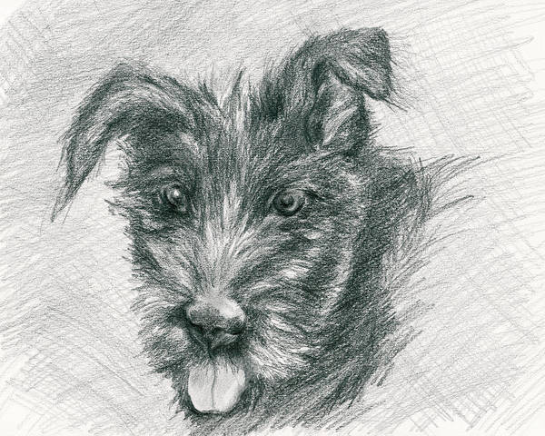 Mutt Drawing - Wolfhound Puppy Sketch by MM Anderson