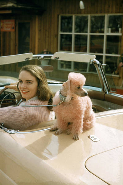 Poodle Photograph - Woman & Her Poodle by Nina Leen