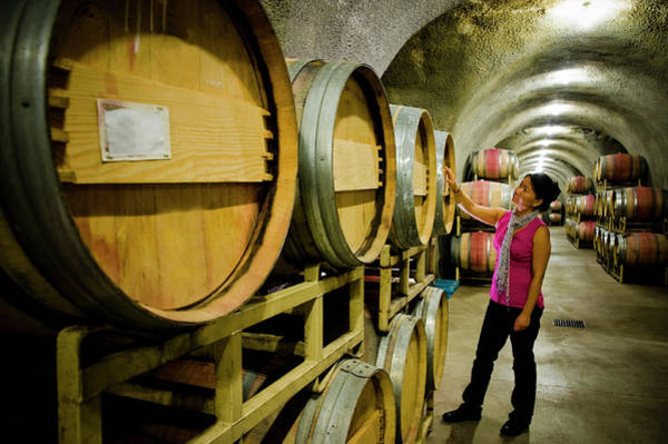 Sonoma County Photograph - Woman Inspecting Barrels In Cave At by Seanfboggs
