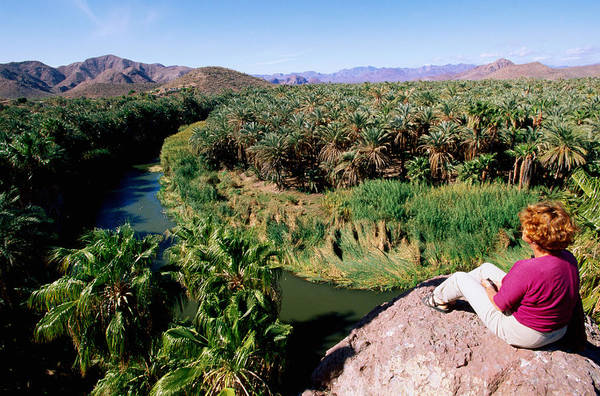 Viewpoint Photograph - Woman Looking Over Rio Mulege From by John Elk Iii