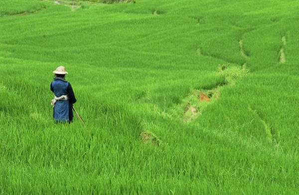 Headwear Photograph - Woman Looking Over Valley Of Rice by David Greedy