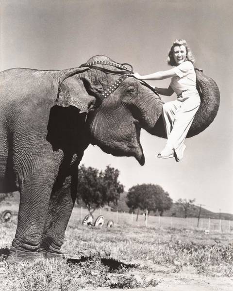 Everett Photograph - Woman Sitting On Elephants Trunk by Everett Collection