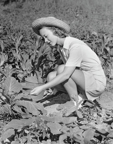 Vegetable Garden Photograph - Woman Working In Garden by George Marks