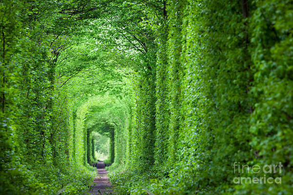Wall Art - Photograph - Wonder Of Nature - Real Tunnel Of Love by Taiga