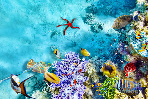Wall Art - Photograph - Wonderful And Beautiful Underwater by V e