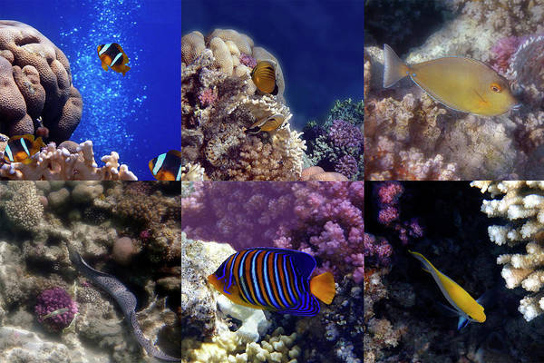 Photograph - Wonderful Red Sea Sealife Collage  by Johanna Hurmerinta
