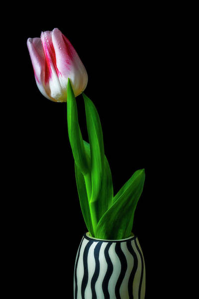 Wall Art - Photograph - Wonderful Tulip In Striped Vase by Garry Gay