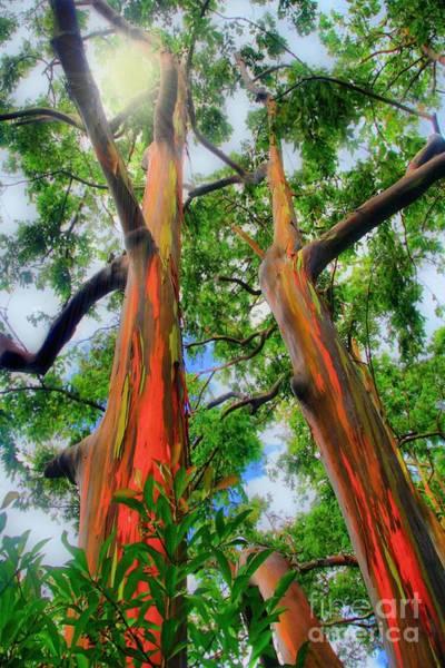 Hawaiiana Photograph - Wondrous Eucalyptus by DJ Florek