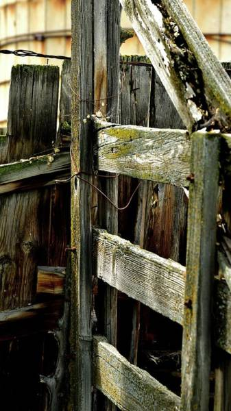 Photograph - Wood Fence Green Moss by Jerry Sodorff