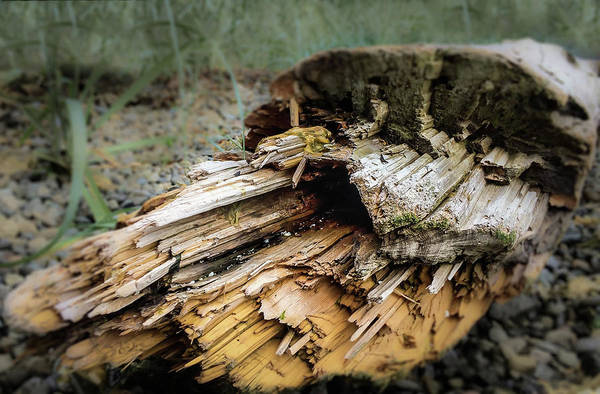 Photograph - Wood Log In Nature No.24 by Juan Contreras