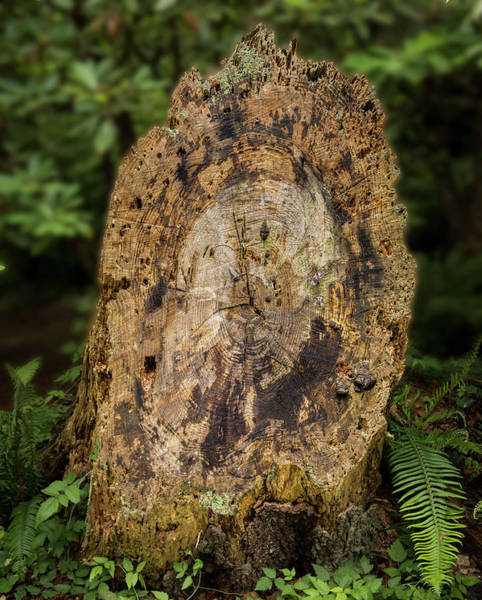 Photograph - Wood Log In Nature No.3 by Juan Contreras