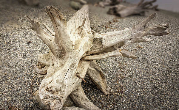 Photograph - Wood Log In Nature No.31 by Juan Contreras
