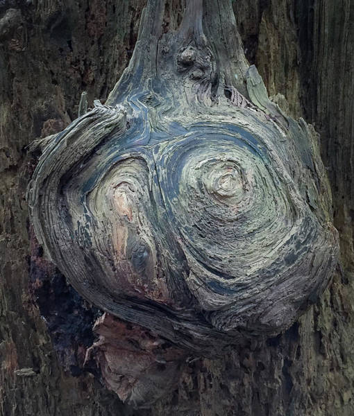 Photograph - Wood Log In Nature No.42 by Juan Contreras