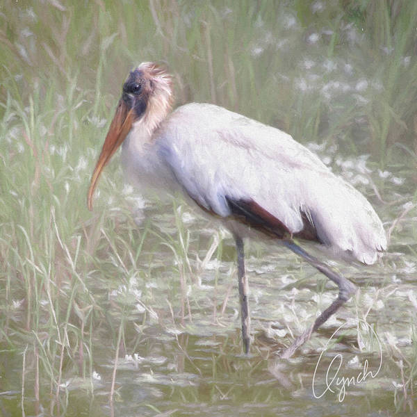 Photograph - Wood Stork by Karen Lynch