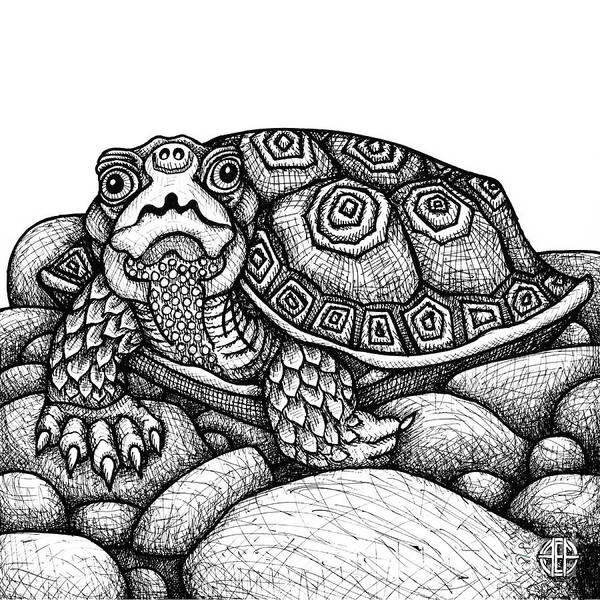 Wood Turtle Art Print