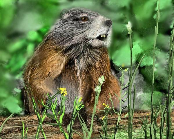Groundhog Painting - Woodchuck by Robert Rearick