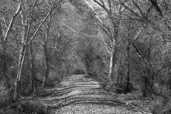 Blythe Photograph - Wooded Path Black And White by Allan Van Gasbeck