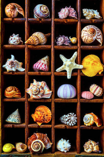 Wall Art - Photograph - Wooden Box Full Of Shells by Garry Gay