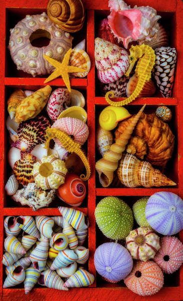 Photograph - Wooden Compartments Full Of Seashells by Garry Gay