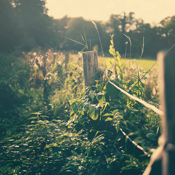 Fence Photograph - Wooden Fence by Kirstin Mckee