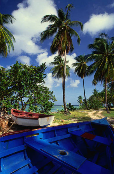 Tobago Wall Art - Photograph - Wooden Fishing Boats Among Palm Trees by Michael Lawrence