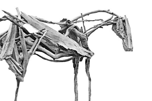 Wall Art - Photograph - Tree Horse by Diana Angstadt