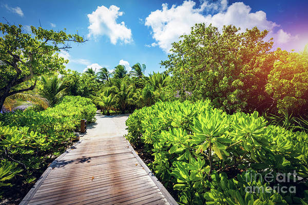 Photograph - Wooden Path In The Tropical Wilderness. by Michal Bednarek