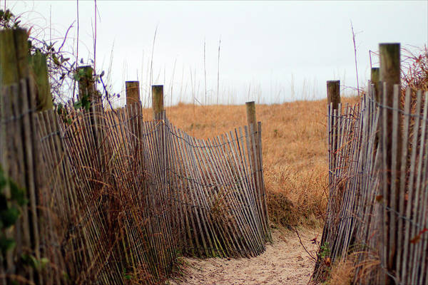 Photograph - Wooden Sand Fence by Cynthia Guinn