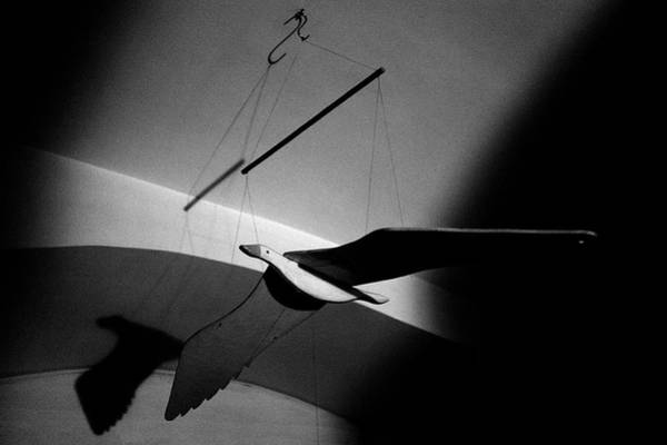 Photograph - Wooden Seagull by Fabrizio Troiani