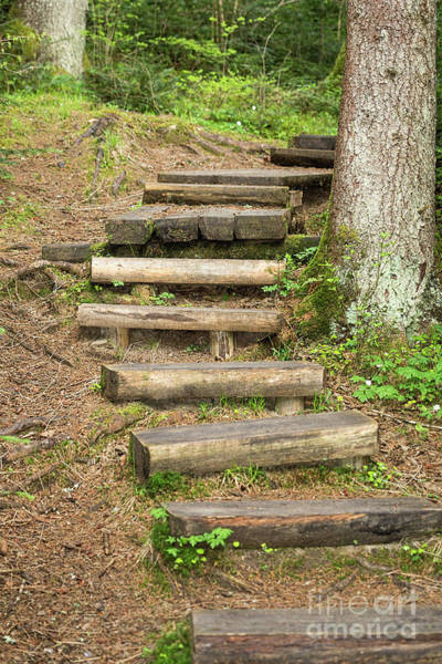 Photograph - Wooden Stairs On A Forest Trail by Les Palenik