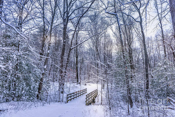 Photograph - Wooden Walking Bridge In A Frozen Forest Covered In Snow During  by Patrick Wolf