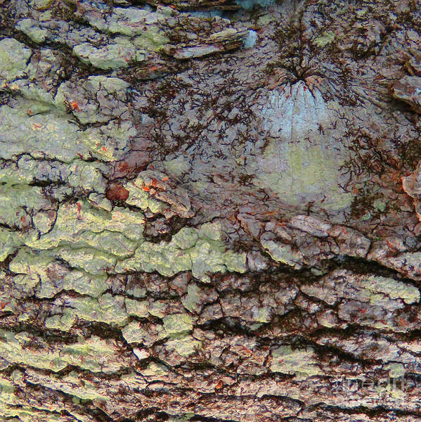 Photograph - Woodland 135 by Amy E Fraser