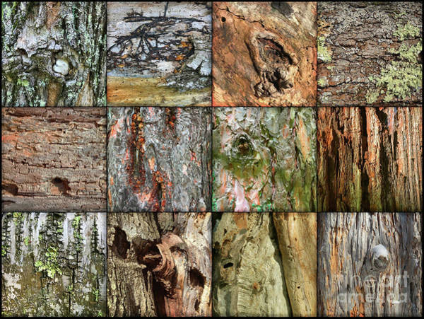 Photograph - Woodland Abstracts Tree Texture Tiles A by Amy E Fraser