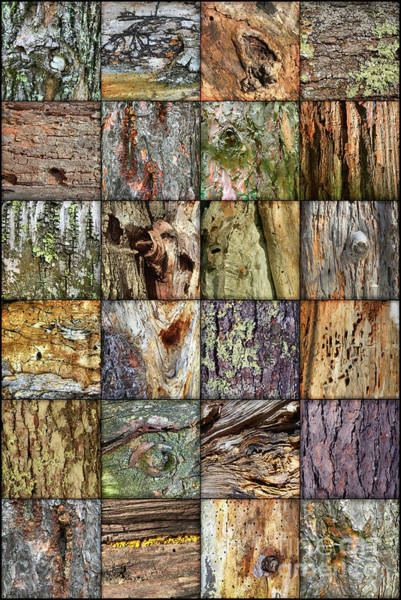 Photograph - Woodland Abstracts Tree Texture Tiles by Amy E Fraser