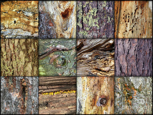 Photograph - Woodland Abstracts Tree Texture Tiles B by Amy E Fraser